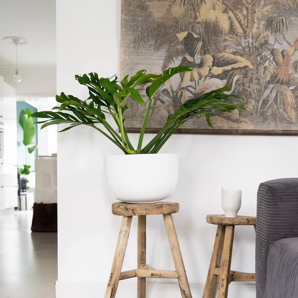 voordelen van kamerplanten
