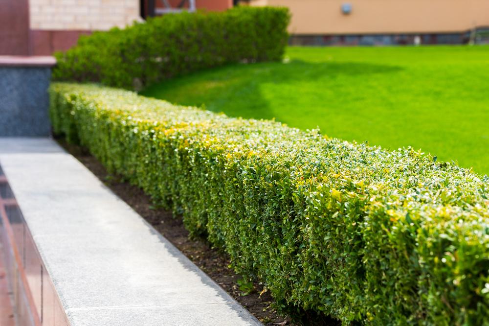 3 tips voor een onderhoudsvriendelijke tuin