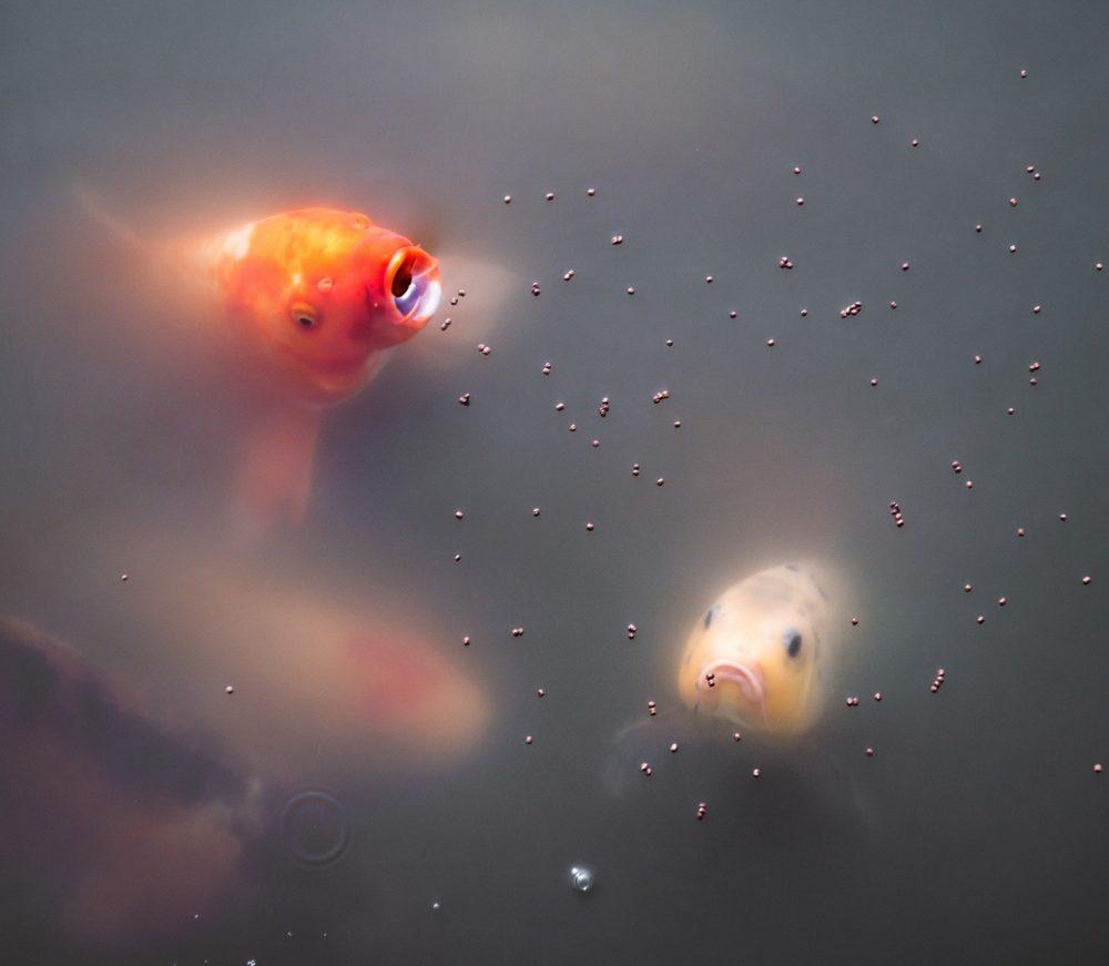 Gezondere vissen