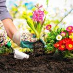 Tuiniertips voor beginners