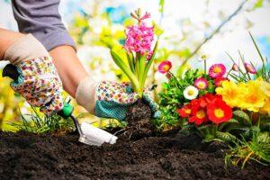 Tuiniertips voor beginners: zo haal je alles uit jouw eerste tuin!
